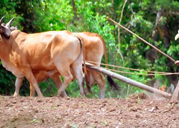La actividad agropecuaria se encuentra como último destino en el contexto de préstamos nuevos con 5.1 por ciento.