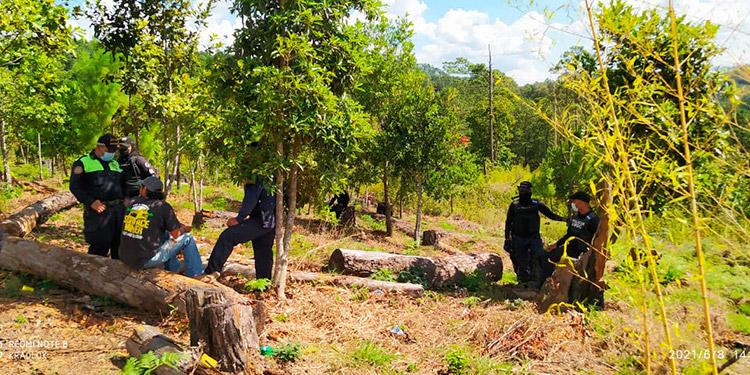 Los tres sospechosos fueron detenidos por cometer el delito de explotación ilegal de recurso forestal agravado.