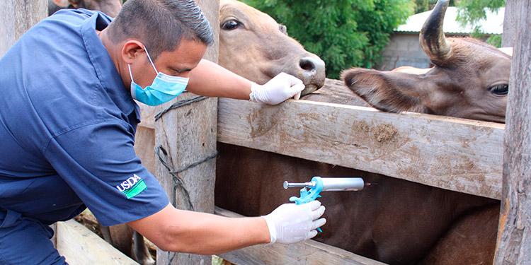 Campañas de Salud Animal.
