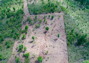 La deforestación de varias áreas localizadas en la zona de amortiguamiento del Parque Nacional la Tigra cada año avanza.