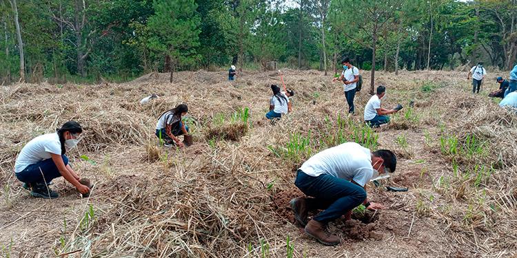"""Colaboradores y estudiantes voluntarios de la Unacifor, se unieron a la actividad ambiental el 30 de mayo, """"Día del Árbol""""."""