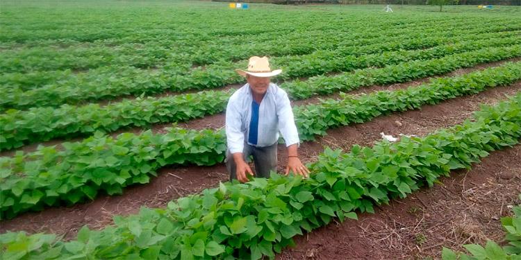 Pequeños productores de café y frijol son beneficiados con las iniciativas de USDA.