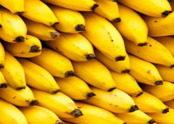 El banano, producto agrícola, registra caída de $138.2 millones en sus exportaciones, con principal destino los Estados Unidos.