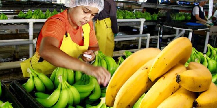 El gobierno reconoce su preocupación porque Ecuador que es fuerte en banano ha quitado muchos espacios internacionales a Honduras.