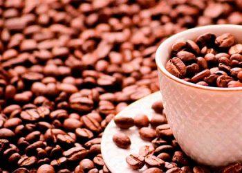La propuesta de la OIC es que el sector café mantenga sus niveles de producción, pese a los embates del cambio climático, en beneficio de las familias productores.