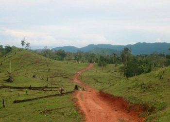 La construcción de carreteras clandestinas entre zonas prohibidas constituye una ilegalidad.