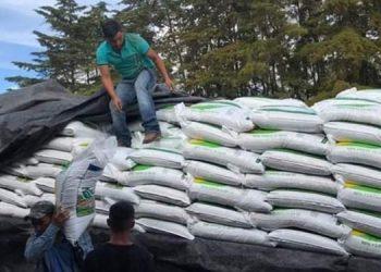 El bono agrícola contiene semilla mejorada, fórmula y urea.