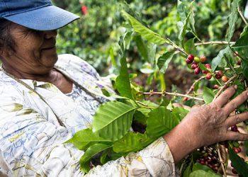 El gobierno del Presidente Juan Orlando Hernández está fortaleciendo sectores como la caficultura.