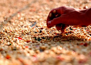Repuntan exportaciones de hierro, café, oro, camarones, puros y aceite de palma.