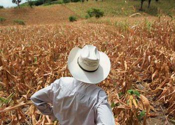 Según la ONU, el cambio climático y la crisis por la COVID-19 provocarán la crisis alimentaria en los países más vulnerables.
