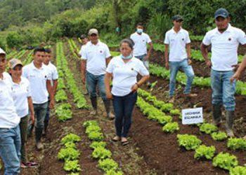 Jóvenes productores en la comunidad de El Pelón.