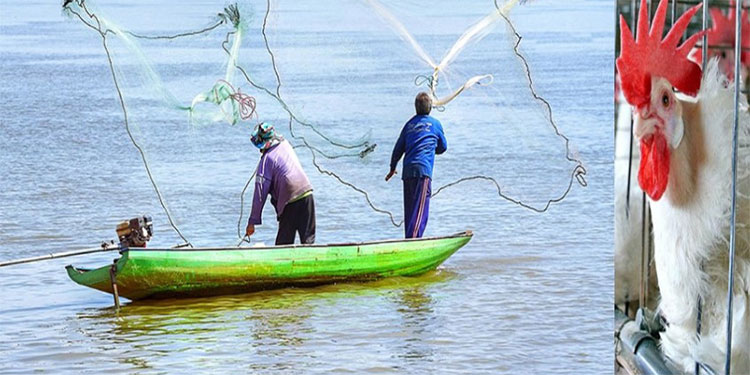 La pesca y la avicultura son dos de las actividades en Honduras que más generan empleos en el sector rural.