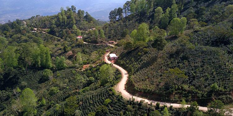 Todos los trabajos de beneficio son realizados de la mano de los productores de café.