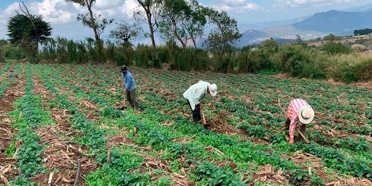 """""""La SAG realizará reuniones periódicas con los productores en vista que se aproximan los meses más lluviosos"""", dijo el ministro Guevara."""