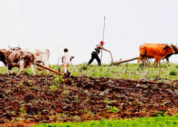 Entre los temas que se abordarán está la importancia y retos de la transformación de los sistemas agroalimentarios y el papel de la agricultura ante la pandemia.
