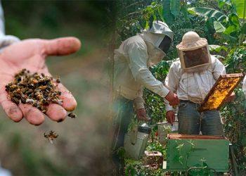 Las granjas apícolas este año perdieron producción y grandes colmenas (foto inserta).