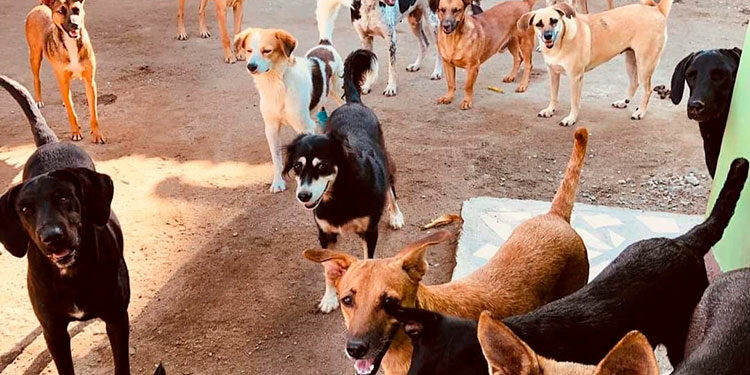 """La Fundación """"Perros Sin Nombre Honduras"""" (FPSN-Honduras), alberga actualmente 40 canes y 27 gatos rescatados de las calles."""