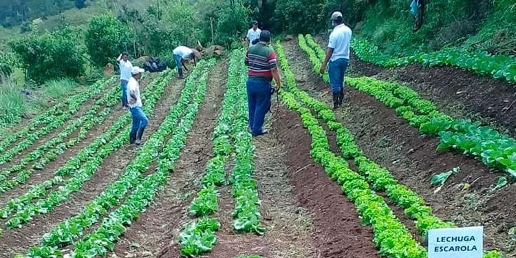 Los jóvenes cultivan 10 tipos de hortalizas.