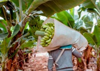En 1990 Honduras comenzó a liberalizar su comercio externo, haciendo hincapié en actividades de exportación sostenibles como parte de su programa global de desarrollo.