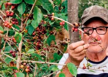 $ 1,100 millones en divisas genera exportación de café.