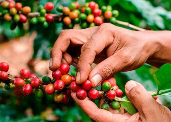 Los productores tienen puestas sus esperanzas en la próxima cosecha que arrancará, oficialmente, el 1 de octubre.