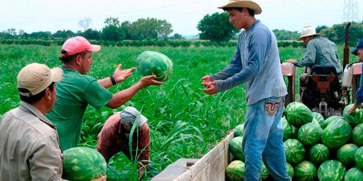 Cambio generacional, uso eficiente de los recursos naturales, cambio climático y la migración hacia centros urbanos, son los principales desafíos en el tema agrícola de Honduras.
