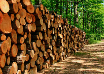 La tala legal e ilegal, el cambio climático y sus plagas, la ganadería, el narcotráfico y la desidia gubernamental entre las causas de la pérdida del área boscosa según expertos.