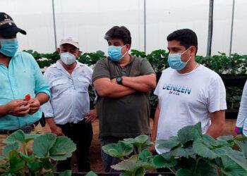 Los productores aprendieron sobre la detección de plagas y enfermedades en los cultivos de fresa.