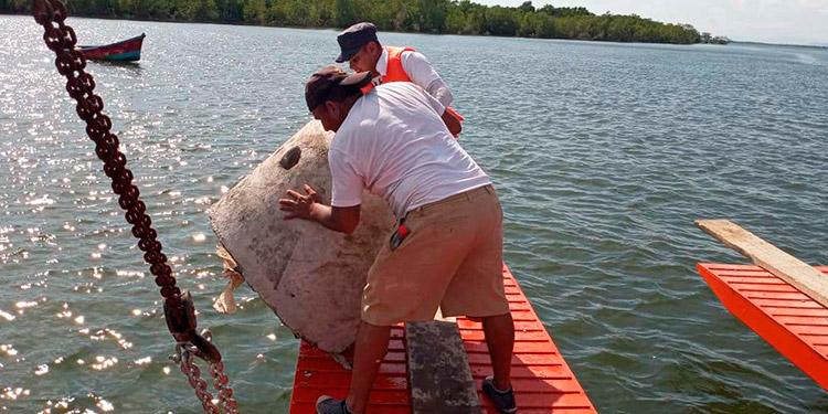 Los domos de arrecifes artificiales fueron colocados en los esteros de Los Elotes y El Caminante.