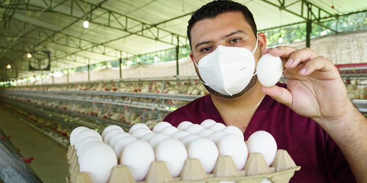 A nivel nutricional, los huevos desempeñan un papel vital en la alimentación de las personas de todo el mundo.