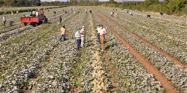 El melón y la sandía son altamente costosos de producir debido a los altos estándares y certificaciones requeridos para exportar a mercados a nivel global.