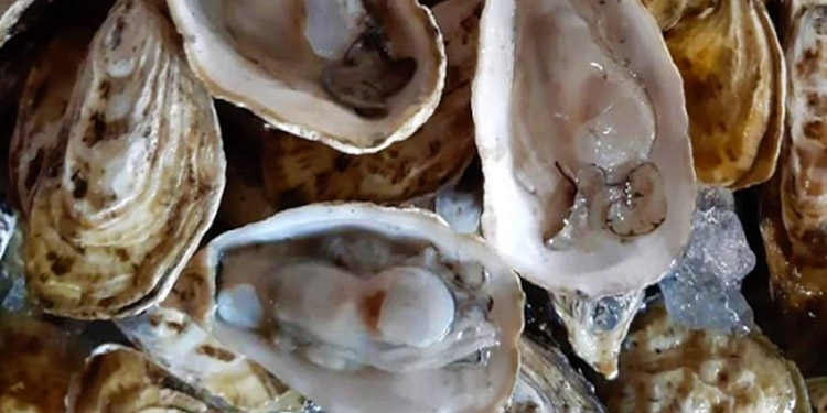 Las concentraciones altas de microalgas que no son productoras de toxinas que se almacenan en el organismo de moluscos bivalvos, según el informe preliminar.