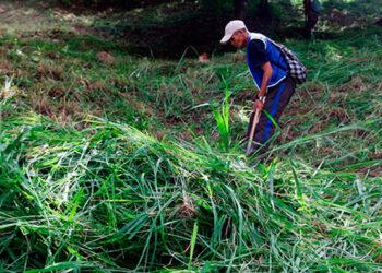 Los propietarios de terrenos que no realicen la limpieza necesaria para evitar y destruir los criaderos de zancudos serán sancionados.