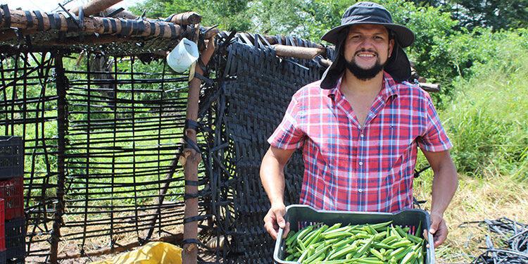El cultivo de la Okra fue apoyado por el Proyecto.