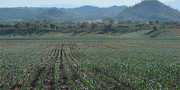 La Innovación y la tecnología de los productos para la protección de cultivos, ha favorecido el aumento de la producción.