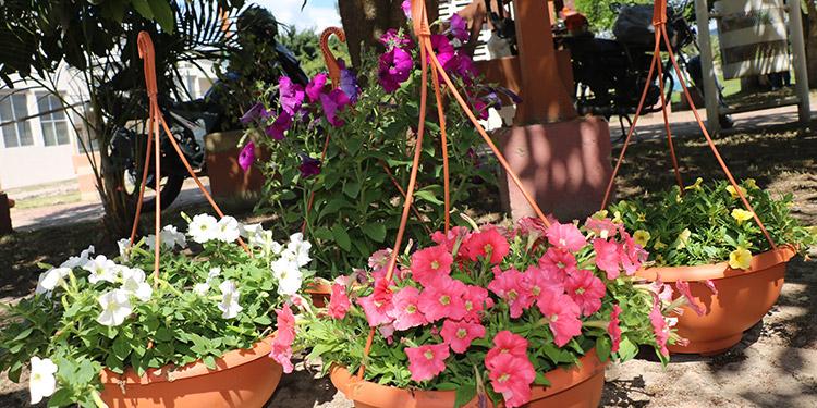 En la expoarte y naturaleza, a desarrollarse en el Centro de Calidad de Vida, junto a la Casa de la Cultura, las primeras maceteras con flores ya estaban siendo ubicadas.