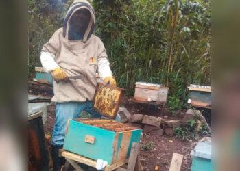 Las cajas rurales apoyan la apicultura.