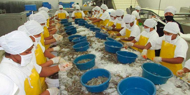 La industria camaronera genera 30,000 empleos directos y 110,000 indirectos en la zona sur de Honduras.