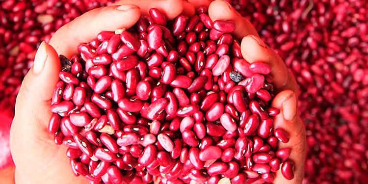 El frijol y el maíz son los granos básicos de mayor consumo entre las familias hondureñas.