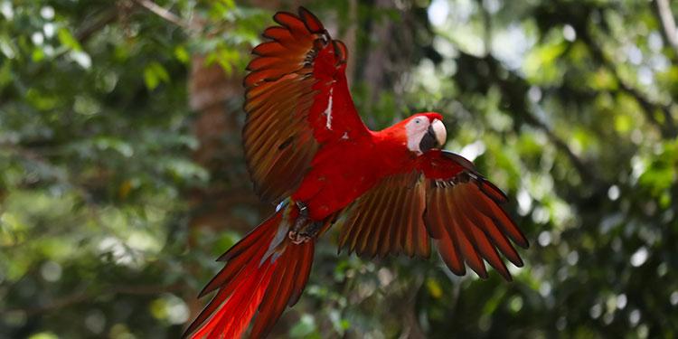 El tráfico de fauna silvestre ocupa el tercer puesto, después de tráfico de drogas y armas.