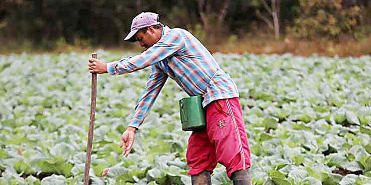 El periodo de lluvias abona a la meta que se tiene en cuanto a cosechas de granos básicos para consumo interno.
