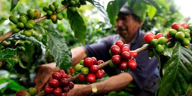 Los buenos precios compensarían el menor volumen que esperan los productores debido a la variabilidad climática.