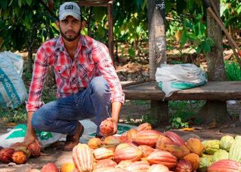 Honduras exporta 1,700 toneladas de cacao al año.